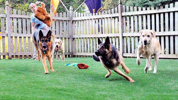 cesped-artificial-perros